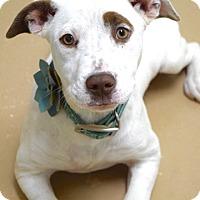 Adopt A Pet :: Karina - Dublin, CA