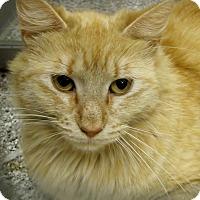 Adopt A Pet :: Zelda - Georgetown, TX