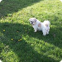 Adopt A Pet :: Gismo - Schofield, WI