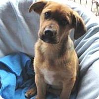 Adopt A Pet :: Robert - Bartonsville, PA