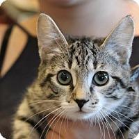 Adopt A Pet :: Bubbles - Potomac, MD