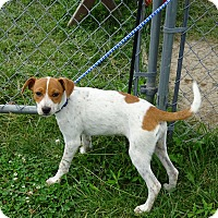 Adopt A Pet :: Buttercup - Delaware, OH