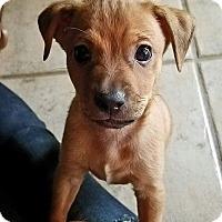 Adopt A Pet :: Lightning - Ft. Lauderdale, FL