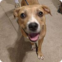 Adopt A Pet :: Nala - Jarrell, TX