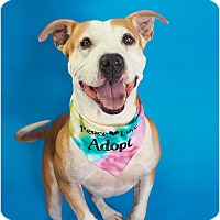 Adopt A Pet :: Thomas - Phoenix, AZ