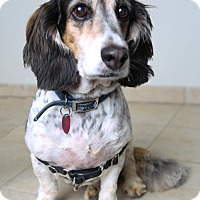 Adopt A Pet :: Murphy D161902: PENDING ADOPTION - Edina, MN
