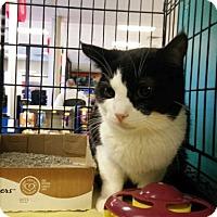 Adopt A Pet :: Desi - Avon, OH