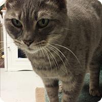 Adopt A Pet :: Squirt - Diamond Springs, CA