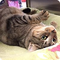 Adopt A Pet :: Pearl - North Las Vegas, NV
