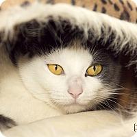 Adopt A Pet :: Sophie - Divide, CO