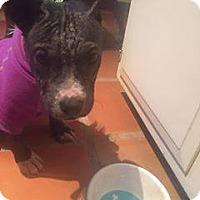 Adopt A Pet :: Maui - Durham, NC