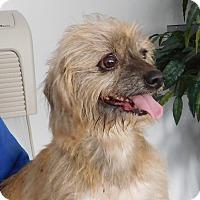 Adopt A Pet :: Georgia May - House Springs, MO
