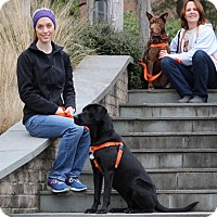 Adopt A Pet :: Queenie - Pinehurst, NC