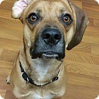 Adopt A Pet :: Copper - Lisbon, OH