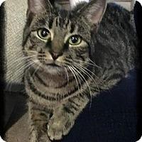 Adopt A Pet :: Roxanne - Shippenville, PA