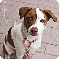 Adopt A Pet :: Roxy - Gilbert, AZ