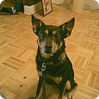 Adopt A Pet :: Gomez - Berkeley Hts, NJ