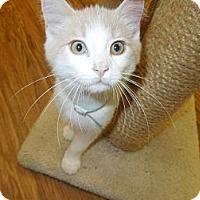 Adopt A Pet :: Chevas - Medina, OH