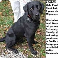 Adopt A Pet :: # 641-09 - ADOPTED! - Zanesville, OH