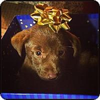 Adopt A Pet :: STUBBS - Torrance, CA