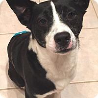 Adopt A Pet :: Bart - Orlando, FL