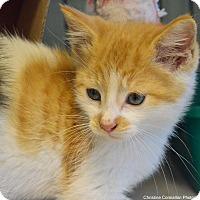 Adopt A Pet :: Fisher - Island Park, NY