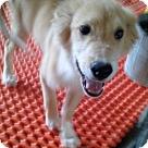 Adopt A Pet :: Pup Ron