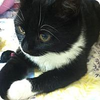 Adopt A Pet :: Peppa - Trevose, PA