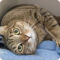 Adopt A Pet :: Gypsy - Merrifield, VA