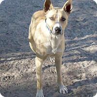 Adopt A Pet :: Scooby - Camden, SC