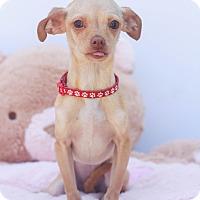 Adopt A Pet :: Bindy - Loomis, CA