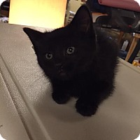 Adopt A Pet :: Paddy - Ortonville, MI