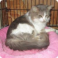 Adopt A Pet :: Jackie - Mebane, NC