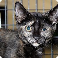 Adopt A Pet :: Megan Rose - Sarasota, FL