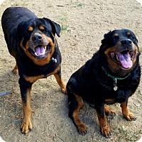 Adopt A Pet :: Emma and Noah - Romoland, CA