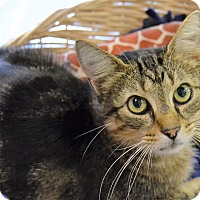 Adopt A Pet :: Bastian - Michigan City, IN