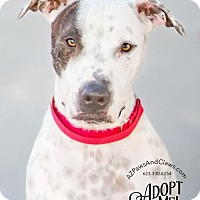 Catahoula Leopard Dog/Great Dane Mix Dog for adoption in Phoenix, Arizona - Nicholas
