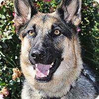 Adopt A Pet :: Sophie - Gretna, NE