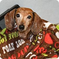 Adopt A Pet :: Waldo - Melrose, FL