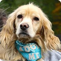 Adopt A Pet :: Buddy - West Grove, PA