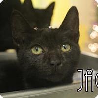 Adopt A Pet :: Jack - Gulfport, MS