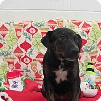 Adopt A Pet :: A077916 - Grovetown, GA