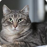 Adopt A Pet :: Hen - Vancouver, BC