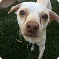 Adopt A Pet :: Odie - Valencia, CA