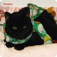 Adopt A Pet :: Paisley - Salamanca, NY