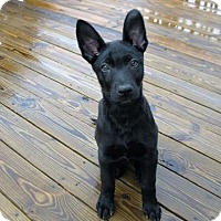 Adopt A Pet :: Wiley - Cookeville, TN
