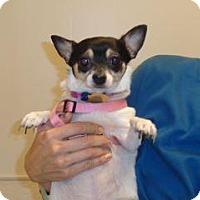 Adopt A Pet :: Cleopatra - Wildomar, CA
