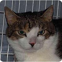 Adopt A Pet :: Jackson - Warminster, PA