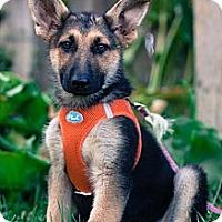 Adopt A Pet :: Ava - Loomis, CA
