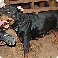 Adopt A Pet :: Cappy - Douglasville, GA